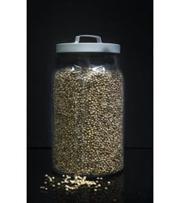 Cilantro grano a granel