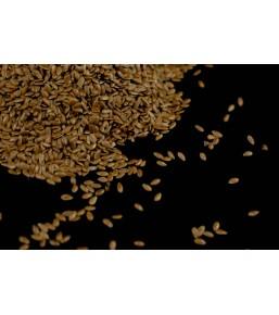 Lino marrón semillas Ecológico a granel