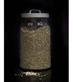 Anís grano limpio