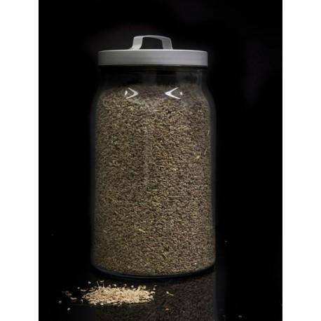 Hinojo semillas a granel