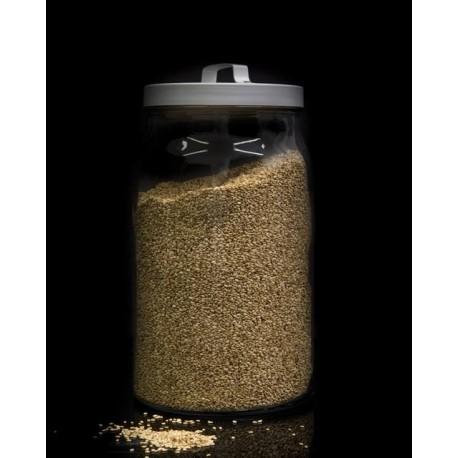 Lino dorado semillas